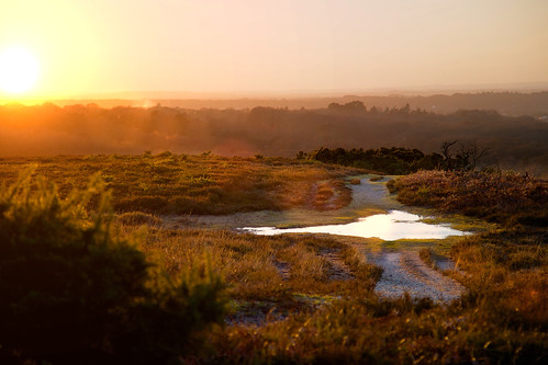 sunset forest landscape hampshire newforest burley