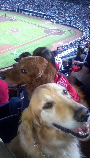Bark in the Park 1