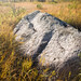 Small photo of Erratic