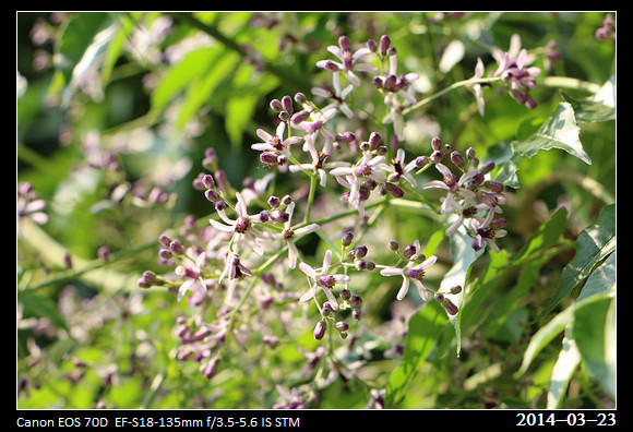 20_20140323_Purple