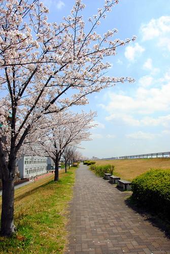 Togokuyama Fruits Park 001r