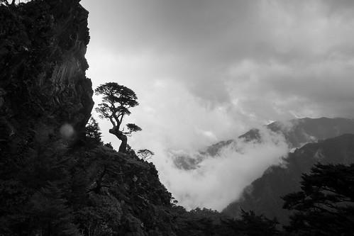 池有名樹;Y形聖稜線未竟(秀霸) -44