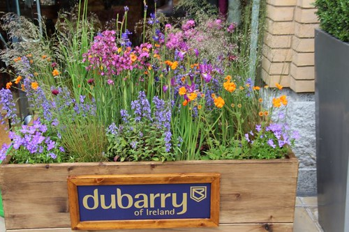 dubarry Chelsea in Bloom 2014