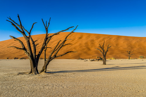tree nature horizontal sunrise nationalpark sand desert dune tranquility wideangle unescoworldheritagesite unesco worldheritagesite un unitednations educational serene sanddune picturesque 自然 namibia acacia wattle 자연 deadvlei 世界遗产 日出 國家公園 나무 camelthorn 일출 colorimage namibdesert worldculturalheritage thorntree claypan 沙丘 hardap namibnaukluftnationalpark dooievlei acaciaerioloba whistlingthorn kameeldoring 纳米比亚 유네스코 사구 나미비아 국립공원 scientificandculturalorganization republicofnamibia 유네스코세계문화유산 namibsandsea giraffethorn vastplace lorganisationdesnationsuniespourl'éducation onuésc vachelliaerioloba 納米布諾克盧福國家公園 納米布沙漠 나미브사막 하르다프주 mogohlo mogôtlhô 金合欢 아카시아속