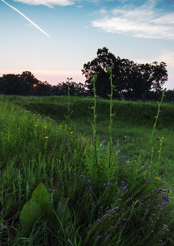 sunrise july prairie kame prairiedock compassplant purpleprairieclover prairiecoreopsis cookcountyforestpreserves illinoisnaturepreserve poplarcreekprairie shoefactoryroadprairie