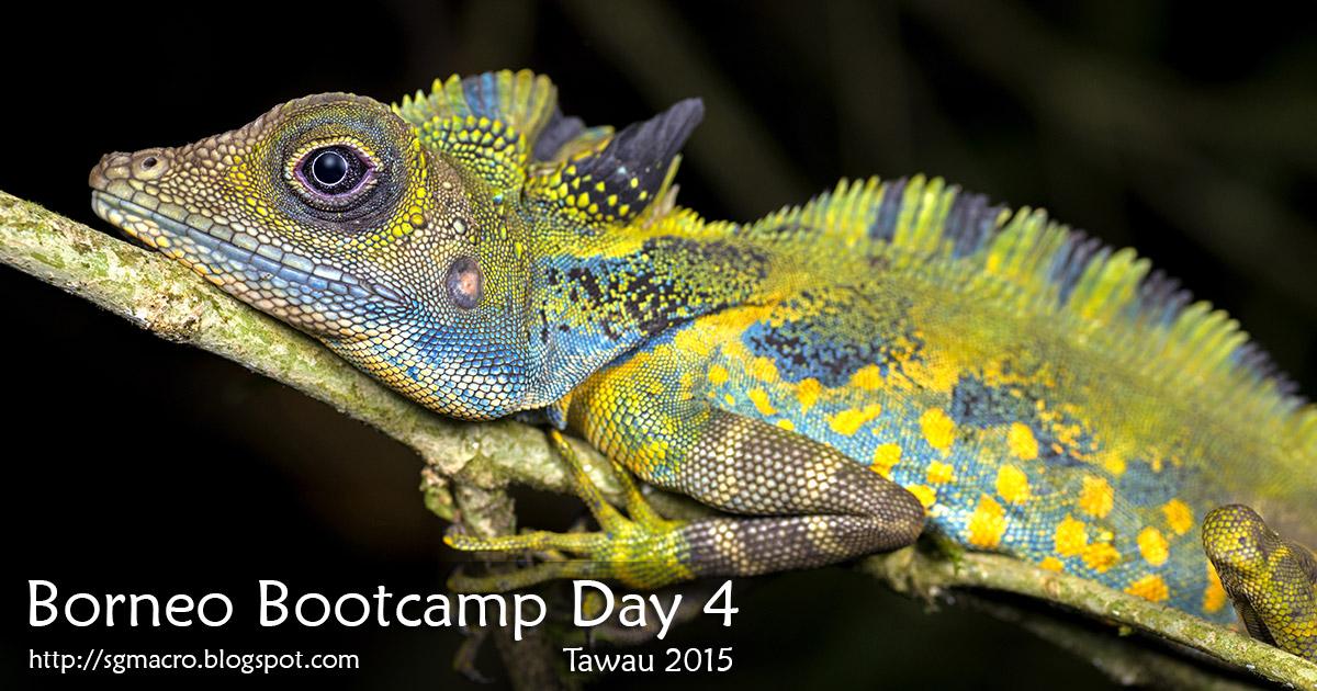 Borneo Bootcamp Tawau 2015 Day 4