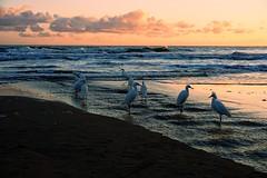 Beach Party (for Birds)