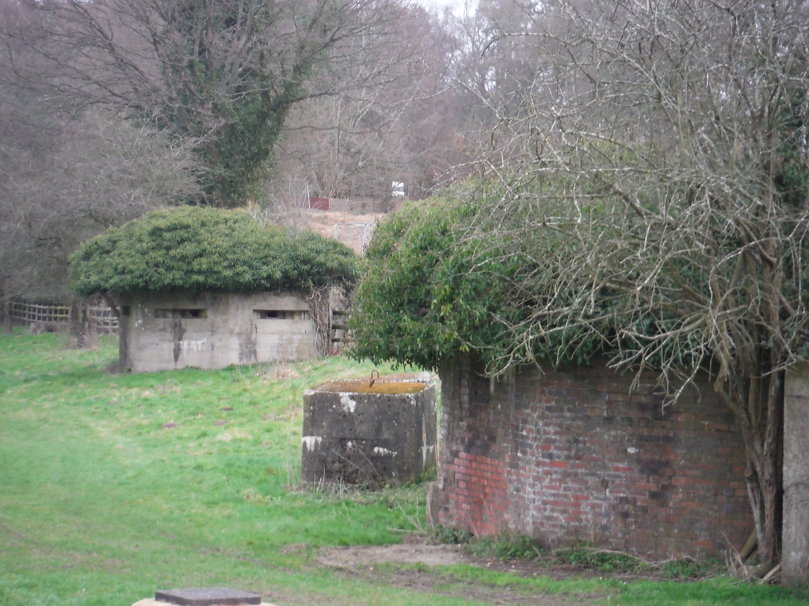 Overgrown Pillboxes, Tilford SWC Walk 144 Haslemere to Farnham