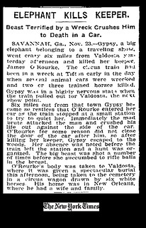 Elephant Kills Keeper. Beast Terrified by a Wreck Crushes Him to Death in a Car. New York Times 1902-11-24