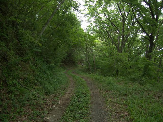 10キロ。ひたすら林道を走る