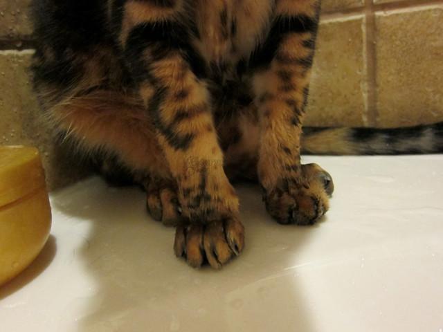 Koa's Wet Paws