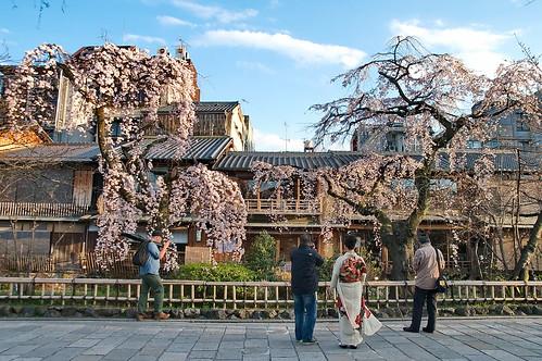 【写真】桜 : 祇園白川