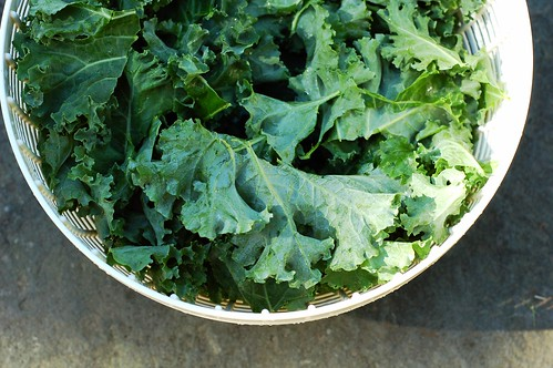Kale in the salad spinner by Eve Fox, the Garden of Eating blog, copyright 2013