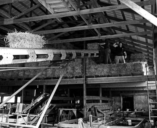 IMG_0184 in the barn