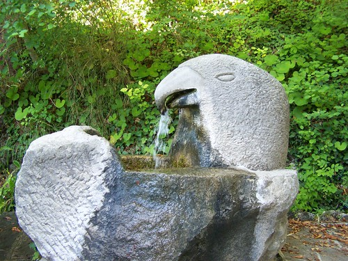 Parrot water fountain
