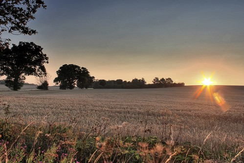 field sunrise crops hdr canoneos500d eastnorthamptonshire summer2011