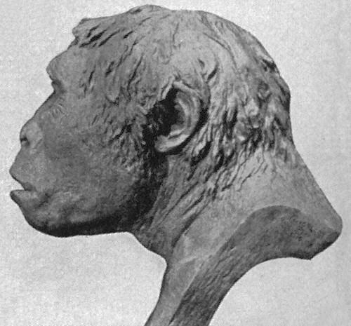 manusia purba indonesia