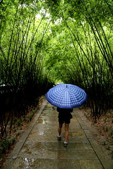 Bamboo Drizzle