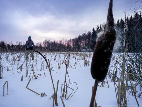 winter sunset woman cloud lake snow tree ice reed forest finland landscape outdoors evening twilight pond scenery flickr adult cloudy dusk horizon relaxing jyväskylä hdr cattail backview contemplation bulrush lowangle typha reedmace modelreleased downshifting warmclothing clickx centralfinland heinälampi samsunggalaxys2 jyväskyläsubregion