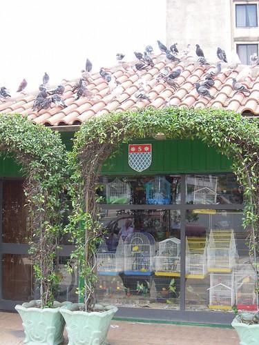 小鳥屋さんの屋根に鳩