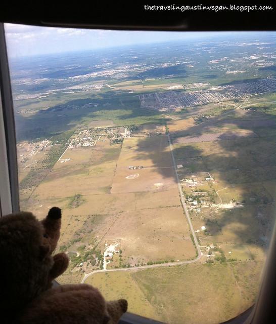 Hedgehogs On A Plane 2