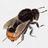 Eschi46's buddy icon