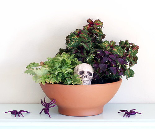 DIY Halloween Dish Garden