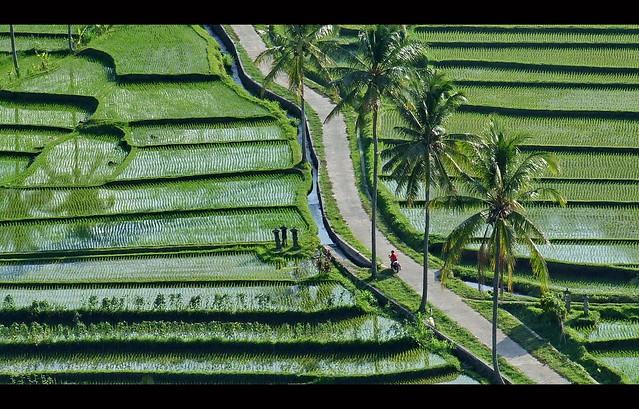 Bali.....