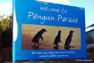 penguin-parade.jpg