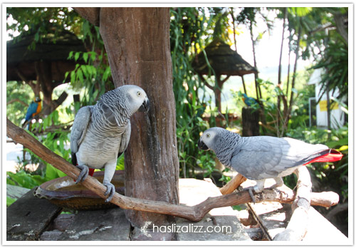 11713168465 b33b24f9ab o BERCUTI DI HATYAI THAILAND PART 6   songkhla Zoo