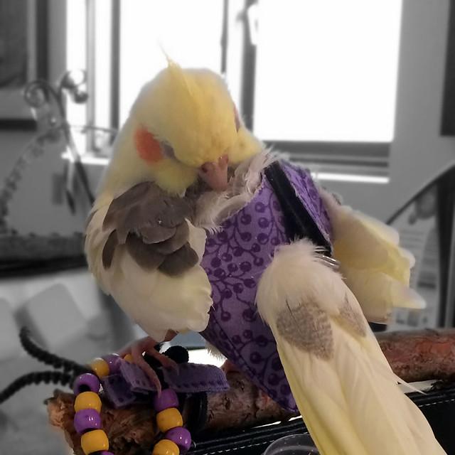 Charlie is grooming.