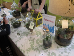 Sylvatica