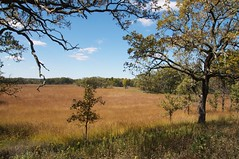 Savanna restoration at Glacial Park McHenry County Conservation District