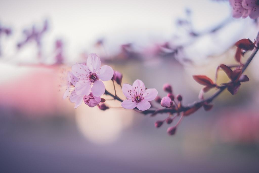 Spring [Explored]