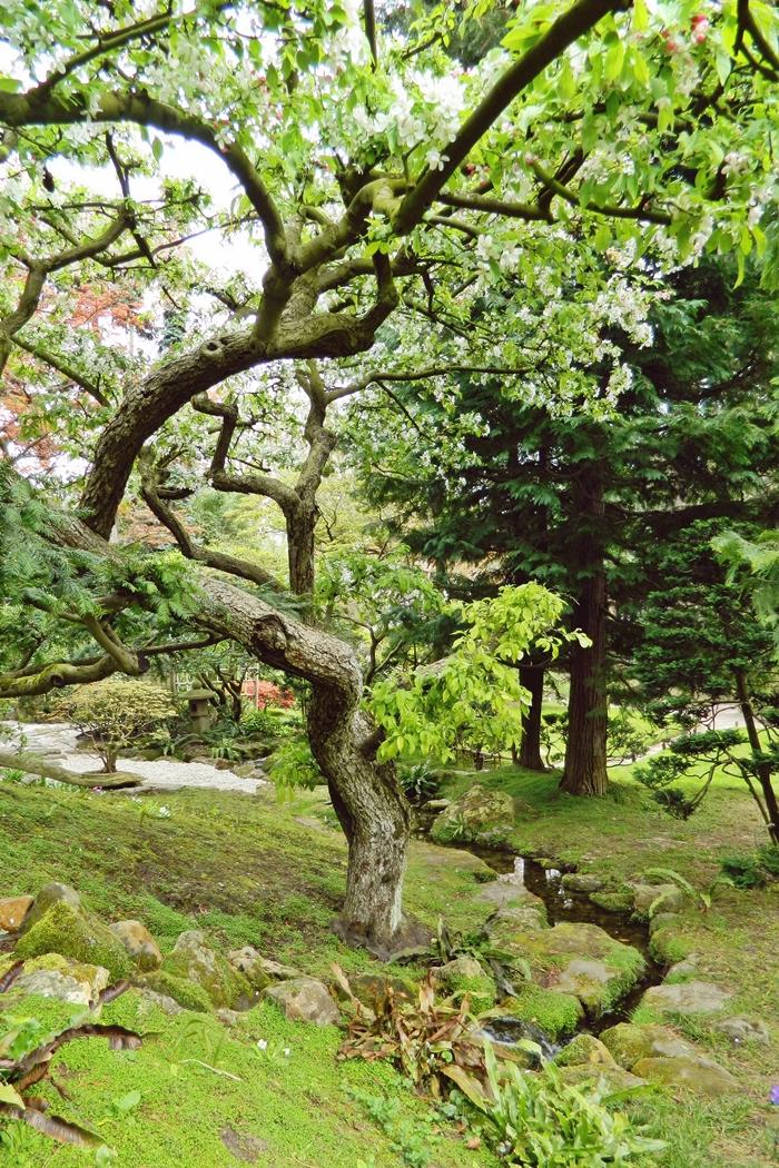 Jardin japonais Albert Kahn (12)