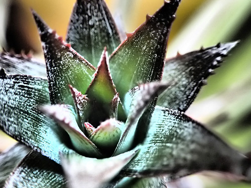 Macro of my Baby Pineapple Using Drama 'Magic' Filter on my Olympus