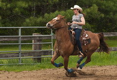 animal sports, rodeo, equestrianism, western riding, mare, stallion, equestrian sport, sports, equitation, reining, horse,