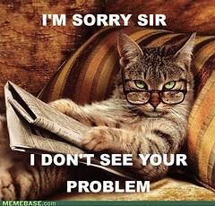 cat smart meme