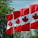 4 Canadian Flags by Sue90ca Calling For Frost Again...Strange