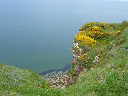 wildflowers and sea cliff