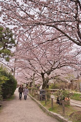 【写真】2013 桜 : 哲学の道/2018-12-24/IMGP9218