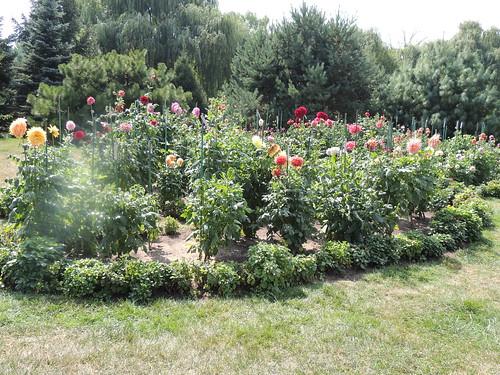 Dahlia Garden at Toledo Botanical Garden