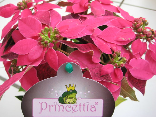 Princettia