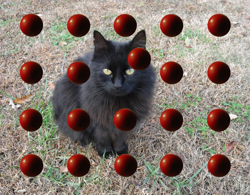 Black Cat Red Balls