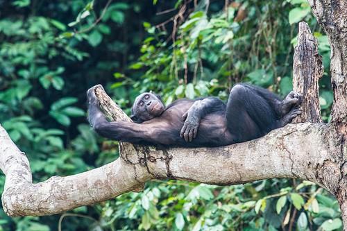 A siesta at Lola _SR photo