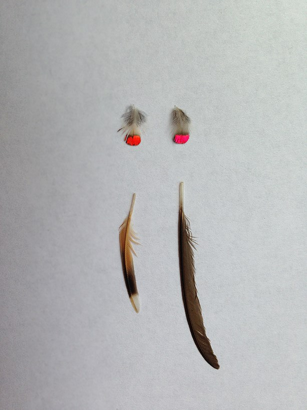Feathers from the gorgets of the Allen's, Anna's Hummingbird