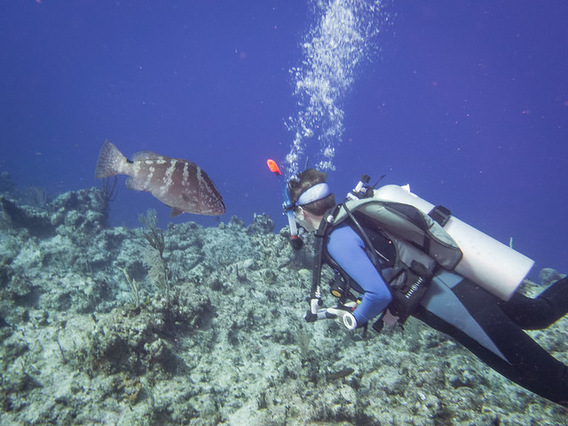 Shelley and a Nassau grouper