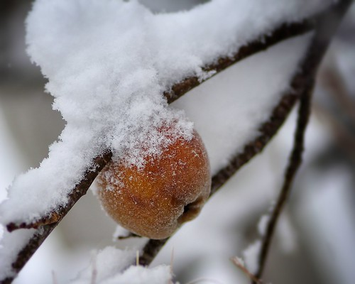 First snow on frozen fruit.