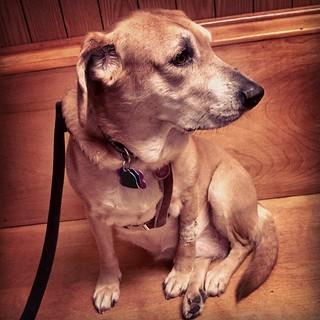 Check up at the vet! #dogstagram #houndmix #ilovemydogs #adoptdontshop #instadog