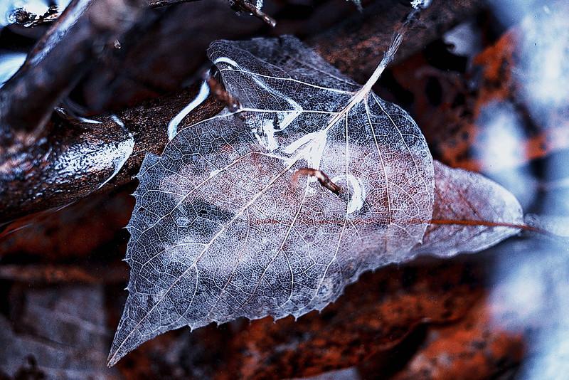 under water leaf